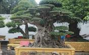 Mục sở thị khu vườn của đại gia Phú Thọ, '1 trong 10 vườn cây cảnh đẹp nhất thế giới'!
