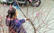 Hà Nội quản lý chặt các chợ hoa Tết tại các tuyến phố trung tâm