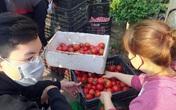 """7 tấn cà chua của nông dân Hải Dương được người Thủ đô """"giải cứu"""" trong vòng 30 phút"""