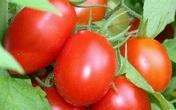 Cà chua dù có thích mê cũng cần tuyệt đối tránh những điều này khi ăn