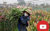 [VIDEO] - Người trồng hoa, cây cảnh mất Tết vì đợt dịch thứ 6
