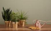 Lợi ích bất ngờ của việc trồng cây trong nhà