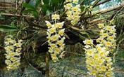 Ngạc nhiên với những bí kíp trồng cây hoa lan đảm bảo sống, nhanh ra hoa đẹp