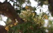 Mùa hoa bún khoe sắc bên dòng Kiến Giang