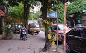 Cây mít sai trĩu quả nằm ngay trên mặt phố Hà Nội khiến nhiều người tò mò, ngạc nhiên.