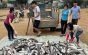 Nhận định nguyên nhân ban đầu về cá chết bất thường tại khu vực vụng Ngọc