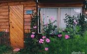 Căn nhà gỗ ở lưng chừng đồi với khoảng sân trồng rau và hoa đẹp như tiên cảnh của cô gái trẻ rời Sài Gòn về Đà Lạt