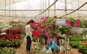 Vựa hoa, cây cảnh Văn Giang cực kỳ bắt mắt khiến khách tham quan ngắm mãi không chán