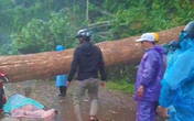 Mưa lớn kèm dông lốc quật cây rừng ngã đổ, đè 2 phụ nữ thương vong