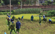 Công an xuống xã lội ruộng gặt lúa giúp các F1, F2 đang phải cách ly