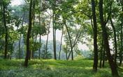 Thâm cung bí sử (234 - 4): Cảm ơn con ma rừng Lào