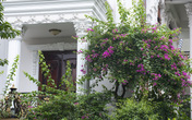 Những ngôi nhà có mặt tiền hoa giấy cực lãng mạn khiến ai nhìn cũng mê