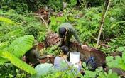 Rừng nghiến cổ thụ ở Hà Giang bị tàn phá: Đình chỉ Giám đốc Vườn Quốc gia Du Già