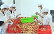 Xuất khẩu vải thiều đã đạt trên 51.000 tấn cho thị trường Trung quốc