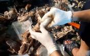 Lần đầu tiên phát hiện số ma tuý cực lớn giấu trong dạ dày lợn ép chân không