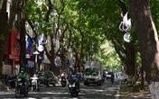 Phố Phan Đình Phùng không chỉ là đẹp lãng mạn mà còn là con đường râm mát nhất Thủ đô