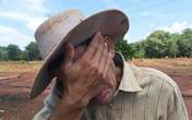 Không thể tin được: Khoai lang 500 - 600 đồng một kg, lão nông 71 tuổi khóc nức nở trên đồng ruộng