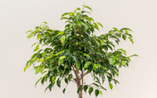 12 loại cây cảnh được NASA gợi ý nên trồng trong nhà để lọc không khí và cải thiện sức khỏe