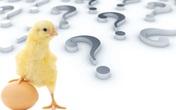 """Con gà hay quả trứng có trước? Câu hỏi """"hack não"""" đã có lời giải?"""