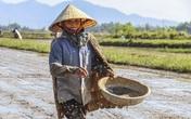 Giá phân bón tăng cao khủng khiếp, người nông dân sốc nghẹn ngào trên đồng ruộng
