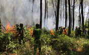Thừa Thiên Huế: Lại thêm vụ cháy rừng thông ở thị xã Hương Thủy
