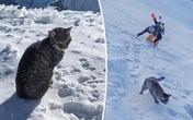 Chú mèo theo chân cặp đôi lên đỉnh núi Thụy Sĩ cao hơn 3.000 mét