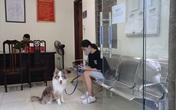 Dắt chó đi dạo, cô gái trẻ bị phạt 2 triệu đồng trong ngày đầu Hà Nội giãn cách: 'Tôi cho chó ra ngoài đi vệ sinh... chỉ ra ngoài 2 phút thôi'
