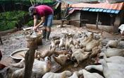 Hướng dẫn viên du lịch về chăn vịt, bán bún riêu cua