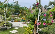 Vợ chồng biến 500m2 đất cằn thành khu vườn xanh mướt chỉ với 10 triệu đồng