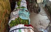 """Không thể tiêu thụ nông sản vì dịch COVID-19, nông dân Hà Nội chấp nhận cắt lỗ, """"đại hạ giá"""" chỉ từ 5.000 đồng/kg rau"""