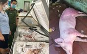 Kinh hoàng cơ sở kinh doanh chuyên tập kết thịt lợn ôi thiu, lợn bệnh để kiếm lời