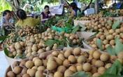 Nhãn chín chỉ 13.000 đồng/kg đến tay người nhận, Hà Nội kêu gọi người dân tiêu thụ