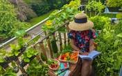 """Ban công ngập rau củ quả xanh mướt mắt trong không gian 2,5m² """"đứng còn phải nhường nhau"""" của mẹ Việt"""