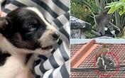 Chó con bị khỉ hoang bắt cóc 3 ngày, sau khi giải cứu dân làng sững sờ chứng kiến chuyện kỳ lạ xảy ra