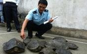 Bắt giữ 29 con rùa và gỗ pơmu trên xe khách