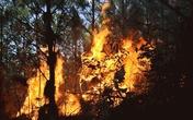 Quảng Ninh: Cháy rừng tại Bãi Cháy