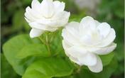 Thổi bùng đam mê trong phòng ngủ với một cành hoa tươi