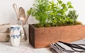 Làm chậu cây xinh trồng rau trong bếp