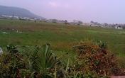 Tĩnh Gia, Thanh Hóa: Dân bỏ ruộng vì… quê lên phố