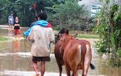Hương Sơn, Hà Tĩnh: Dân xót xa thu dọn sau lũ dữ