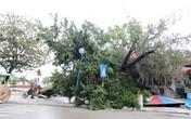 Cận cảnh TP Hạ Long tả tơi sau bão