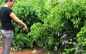 Vụ con tâm thần sát hại cha ở Nam Định: Nhát dao nát lòng người ở lại