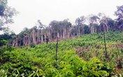 Rúng động Quảng Bình: Dùng thuốc diệt cỏ để dọn rừng