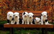 Ngắm 6 anh em nhà chó gây sốt cộng đồng mạng