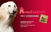 Choáng với chiến dịch quảng cáo bao cao su dành cho chó, mèo