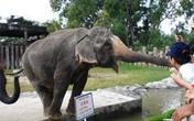 Người bị quật chết ở Đại Nam gần gũi với voi Ka từ nhỏ