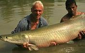 Đàn cá khổng lồ bơi trong hồ ở Sài Gòn