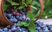 7 rau quả giàu chất chống oxy hóa, cực tốt cho chị em