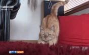 Mèo thoát chết nhờ... được chó hiến máu