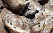 Kinh hoàng thịt bò khô làm từ thịt lợn thối